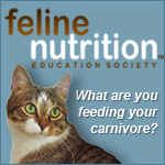 Find out how to feed your cat a species appropriate diet